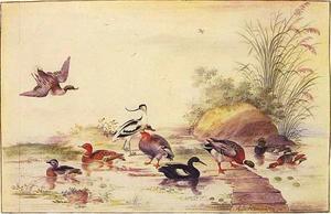 Eenden en andere watervogels aan de waterkant