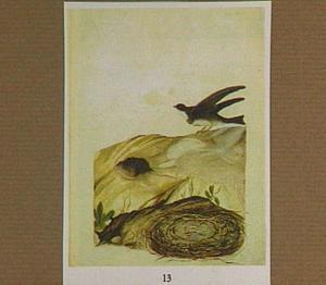 Oeverzwaluw bij nestgang