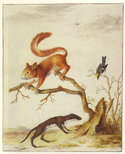 Studie van een eekhoorn en een Goudhaantje op een holle boomstronk, met daarin eieren die bedreigd worden door een Wezel