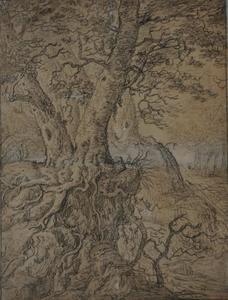 Twee bomen met kronkelende wortels in een bergachtig boslandschap