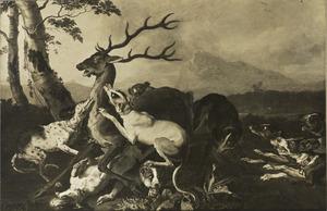 Een hert, belaagd door een meute honden