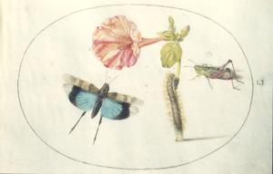 Nachtschone met rups, vlinder en veldsprinkhaan