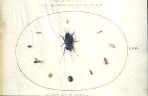Elf insecten waaronder kevers en vliegen