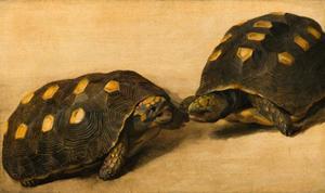 Twee Braziliaanse schildpadden