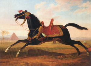 Paard van de Mamelukken