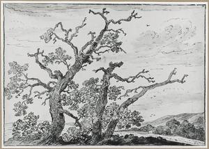 Drie afgeknotte bomen in heuvellandschap