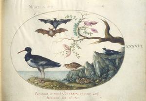 Vier vogels waaronder kwartels en twee vleermuizen