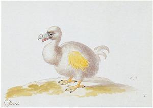 Witte dodo
