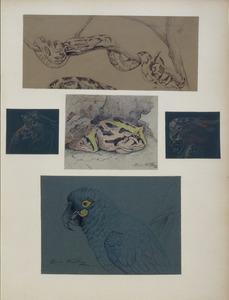 Blad met vijf studies van vogels, padden en een slang