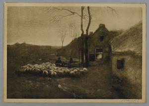 Kudde schapen bij een boerderij
