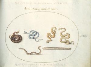 Vier slangen en een amphisbaena [slang met twee koppen]
