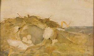 Vogelnestje in de duinen