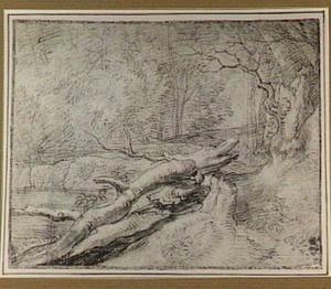 Boslandschap met dode boomstammen