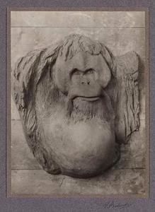 Foto van het ontwerp in klei van de plaquette van de orang oetan Sultan.