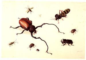 Negen uitheemse insekten