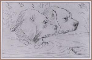 Koppen van twee zwemmende honden