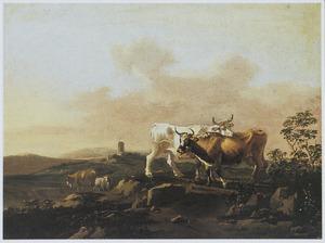 Grazende koeien in een wei