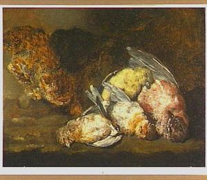 Kat bij dode zangvogels