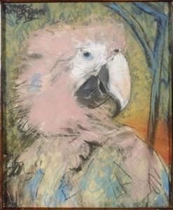 Kop van papegaai