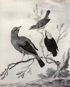 Nachtegaal en twee andere vogels op een tak