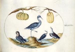 Vier vogels en twee pompoenen