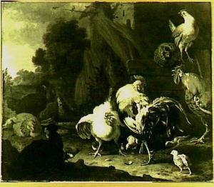Hanen, kippen en kuikens op een erf