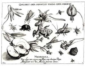 Kikker, sprinkhaan, kever en andere insecten, een halve appel, schelp en enkele bloemen