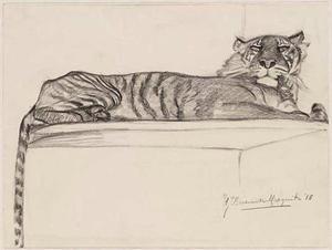 Liggende tijger