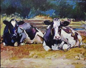 Liggende koeien