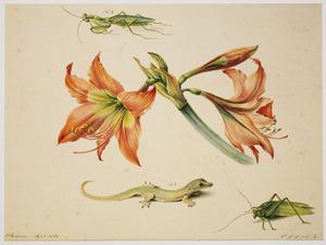 Amaryllis met hagedis en insecten