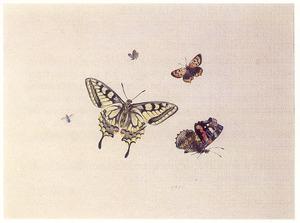 Vier vlinders en een ander insect