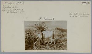 Koe met jonge hoedster