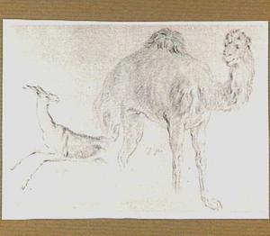 Dromedaris en hert