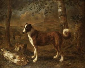 Hond in een landschap