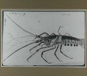 Poticúcuria (Braziliaans schaaldier)