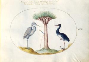 Drakenboom, waaruit hars vloeit, geflankeerd door ooievaarachtige en zwarte ooievaar