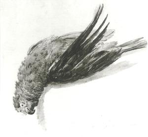 Studie van een dode papegaai