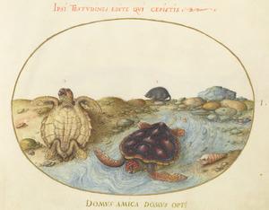 Beekje met schildpadden en een knaagdier