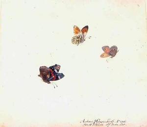 Atalanta en twee andere vlinders