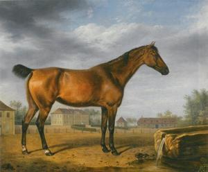 Portret van een Engelse volbloed op een landgoed