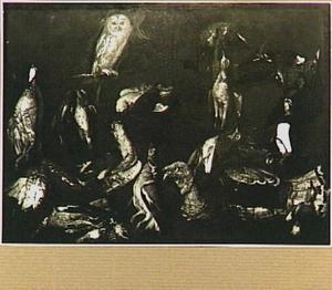 Studie van dode en levende vogels