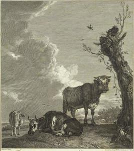 Jonge stier en koeien in een weiland