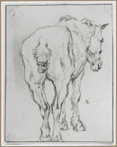 Staand paard, op de rug gezien