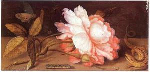 Roos, Hagedis, Vlinder en rups