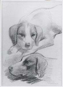 Twee hondenkoppen