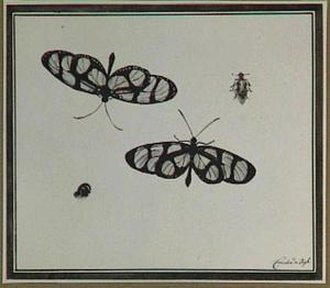 Twee vlinders en twee andere insecten