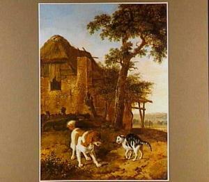 Een hond en een kat op een boerenerf