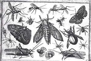 Uiltje en andere insecten