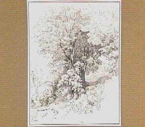 Landschap met loofboom