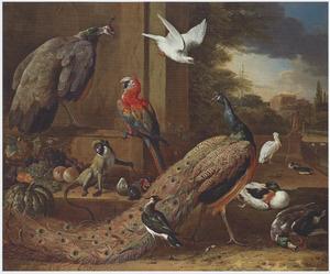 Een aap, pauwen, een papegaai en andere vogels op een terras